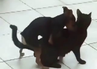 Small doggy fucked a cute kitty in the doggy style