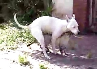 Sweet white dog and a nice cat are trying to fuck